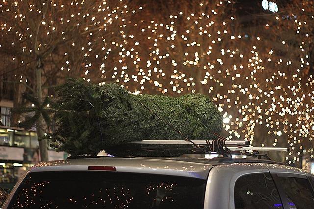 Ako správne prepravovať vianočný stromček