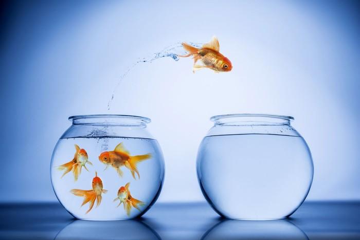 Ako začať chovať rybičky?