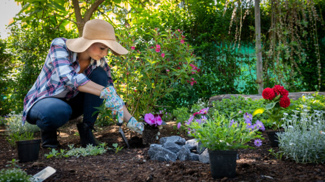 Dokonalá záhrada už tento rok
